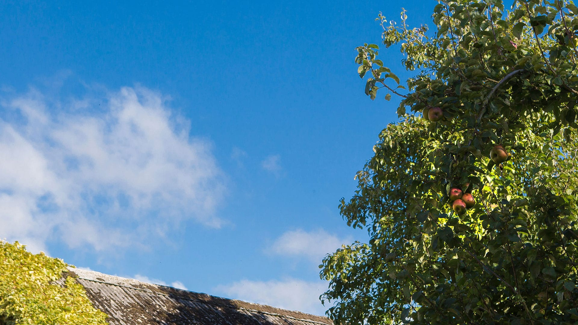 Blue Sky Apple Tree Orchard Nature Outdoors Holiday-Homes-Ireland-Meath-Dunshaughlin-Self-Catering