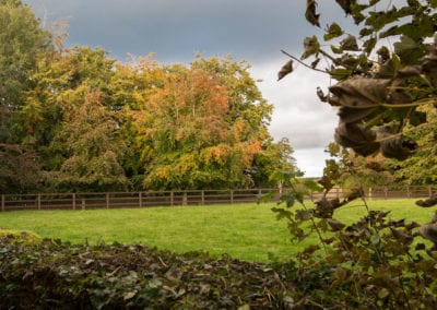 Irish Trees Forest Field Holiday Homes Ireland Meath Dunshaughlin Self Catering