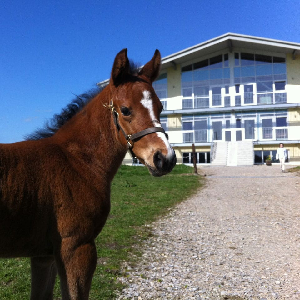 things to do in meath Royal-Meath-Equestrian-Centre-Dunshaughlin-Self-Catering-Cottages