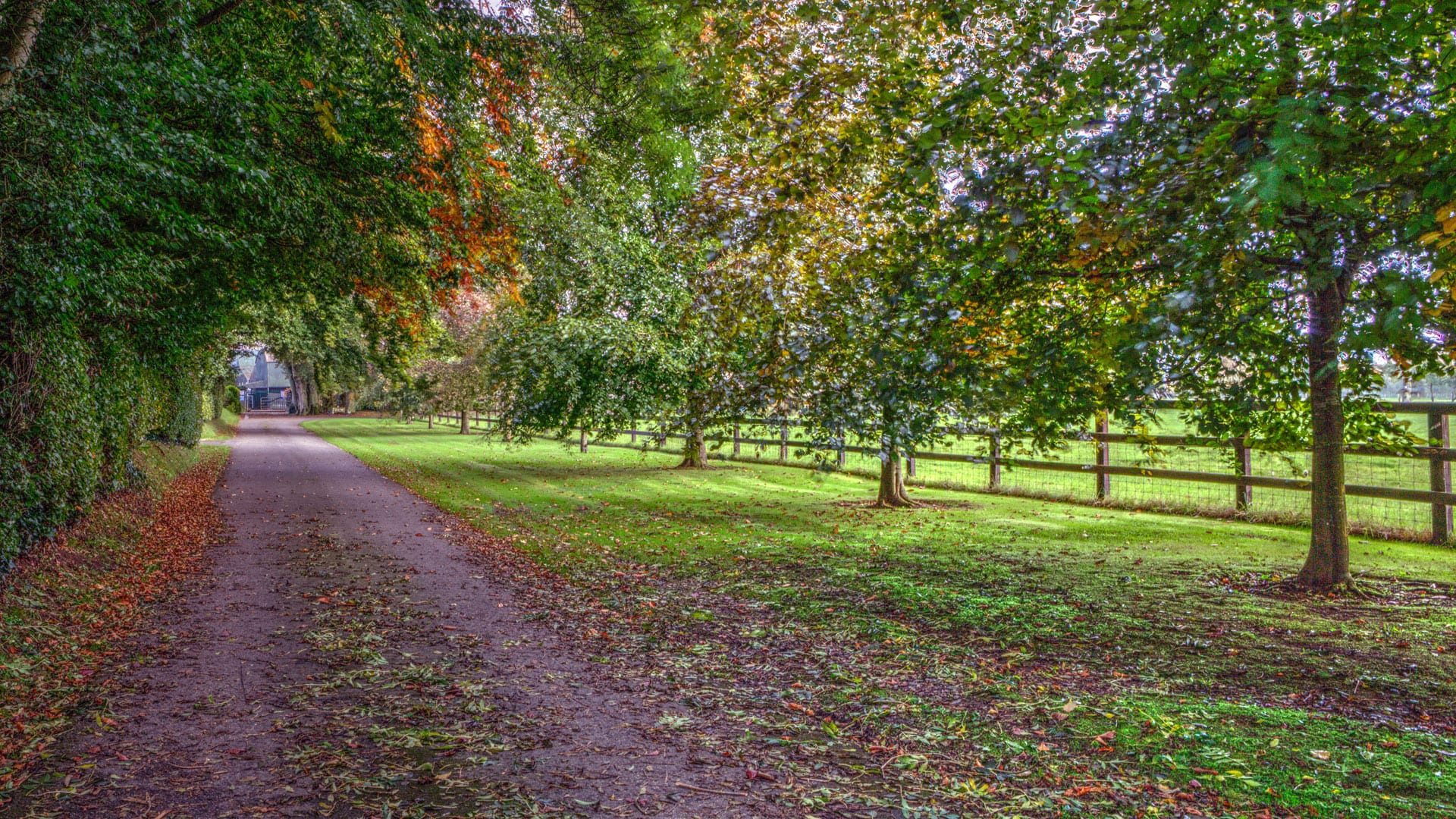 Vibrant-Outdoors-Escape-Nature-Field-Trees-Farm-Holiday-Homes-Ireland-Meath-Dunshaughlin-Self-Catering